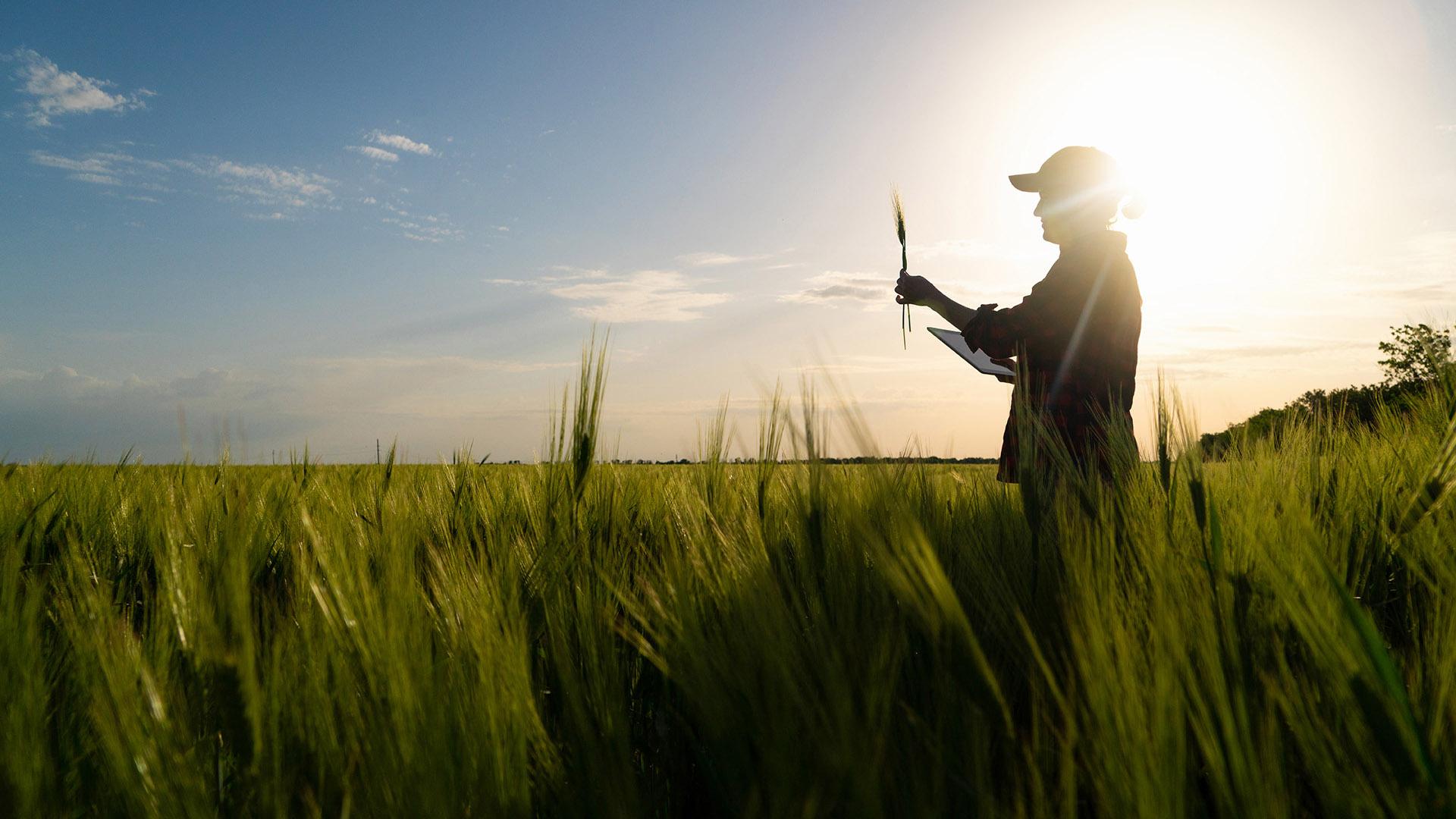 """Webinar """"L'eccellenza delle filiere agroalimentari in Sicilia"""""""